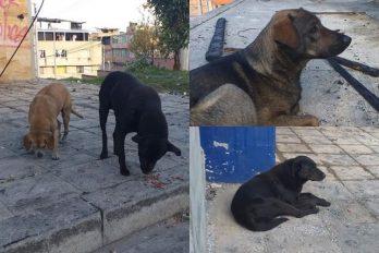 Perros 'vecinos' de los CAI, afectados por los ataques ¡Aún así hubo lindos finales!
