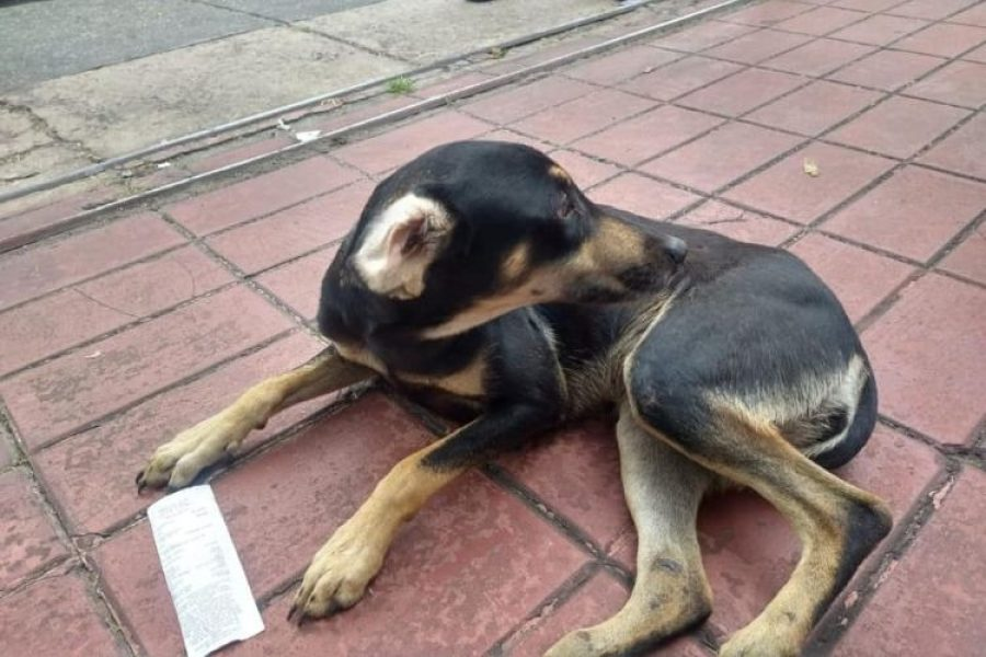 Preocupación por aumento de maltrato animal en Bogotá en la pandemia