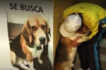 Señora de la tercera edad se reencuentra con su perro robado en un supermercado