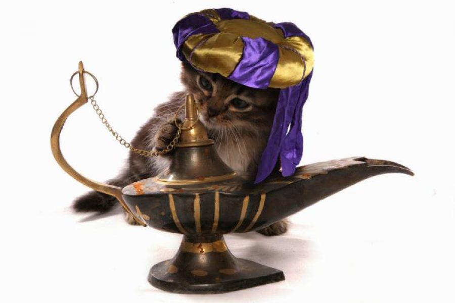 Conoce el precio del gato más costoso del mundo, ¡cumple deseos!