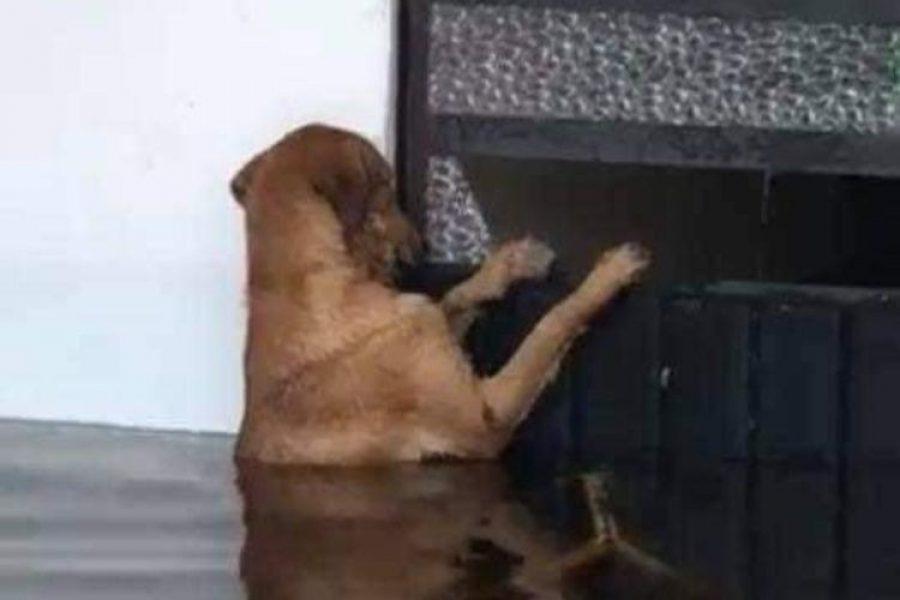 Perro abandonado tras inundaciones regresa a la espera de sus dueños