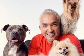 Tratar a los perros como humanos es una forma de maltrato: César Millán