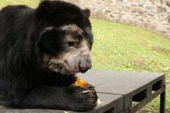 Bioparques y zoológicos reciben 79 toneladas de alimentos para fauna silvestre