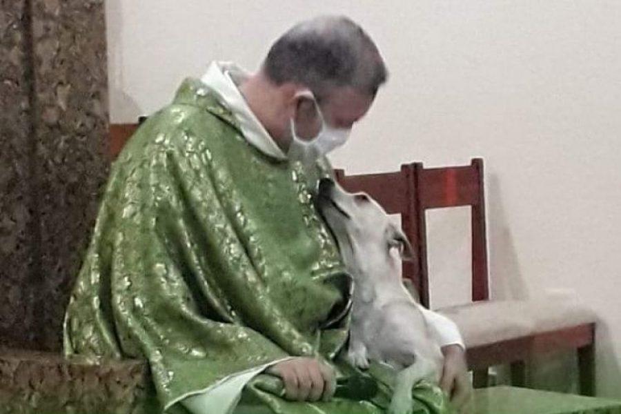 El sacerdote que lleva perros callejeros a las misas para que los adopten