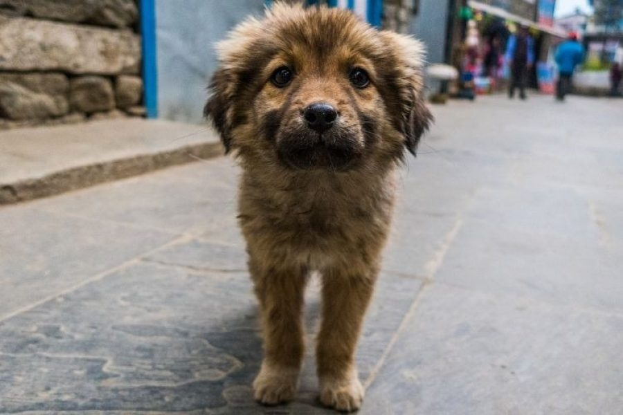 Nueva ley castiga con un año de cárcel a quienes abandonen a sus mascotas
