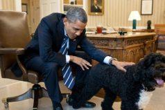 'Sunny', la mascota del presidente Barack Obama, mordió la cara a invitada de la Casa Blanca