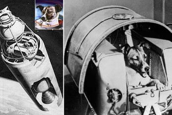 5 cosas dramáticas que no nos contaron sobre Laika, el primer perro en el espacio