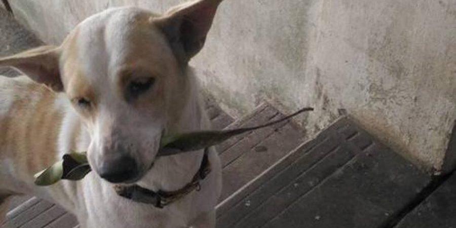 Perro callejero conquista las redes por llevar regalos a la mujer que le da de comer. ¡Te conmoverá!