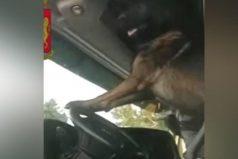 Mira la curiosa reacción de un perro policía al encontrar droga en un vehículo