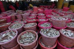 Un estudio cuestiona lo saludable de ciertos pescados en la dieta: el mercurio podría aumentar el riesgo de ELA