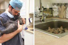 ¿Buscando trabajo? Esta compañía te pagará por abrazar gatitos todo el día