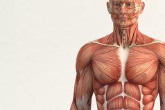 Científicos han identificado un nuevo órgano en el cuerpo humano