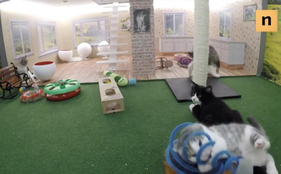 Crean el reality show más tierno del mundo protagonizado por cuatro gatos