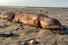 La monstruosa criatura que apareció tras el paso del huracán Harvey y nadie sabe qué es