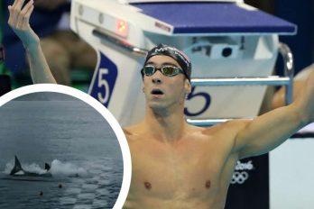 Michael Phelps nadó contra un tiburón y fue una gran decepción para sus fans (pero no porque perdió)