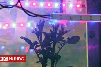 La asombrosa resistencia de una papa cultivada en Perú que podría sobrevivir en Marte