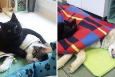 Conozca la increíble historia del gato que cuida a animales enfermos