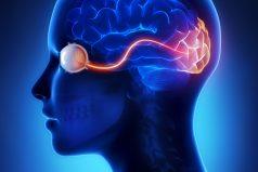 Descubren un área del cerebro que no madura hasta los 36 años