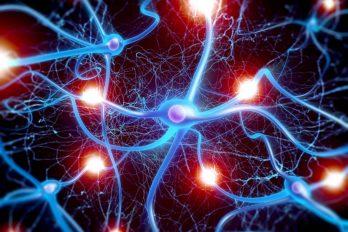 Encuentran la forma de parar y revertir el párkinson y el alzhéimer