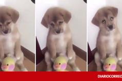 La tierna reacción de un perrito cuando es castigado por su dueño