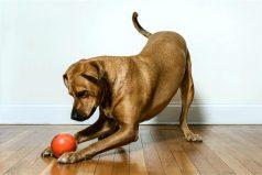 Estos son algunos de los mejores 'gadgets' para mascotas del mercado