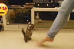 El gatito con el mejor ritmo del mundo, baila al compás de su humana
