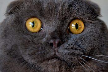 ¿Rebelde? Este gato que se 'estresa' por los regaños de su amo enternece las redes