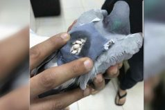 Atraparon a una paloma con casi 200 píldoras de éxtasis en su espalda