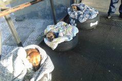 Trabajadores de una estación de camiones protegen del frío a perros callejeros