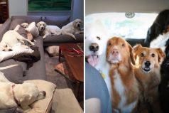 Un perro se roba el corazón de miles de usuarios durante un concurso canino