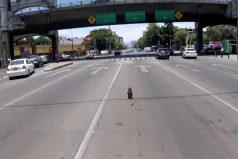La frenética persecución en la Ciudad de México para salvar la vida de un perro