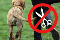 España prohibirá las mutilaciones a los animales, sin excepciones
