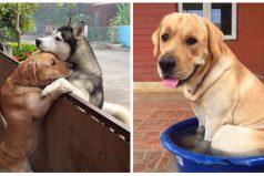 Un perro aprovechó la mínima oportunidad para escaparse de casa y el motivo es conmovedor