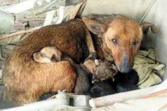 Esta perrita le salvó la vida a un bebé abandonado protegiéndolo del frío como a sus cachorritos
