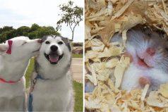 18 adorables animales sonriendo que mejorarán completamente tu aburrido y estresante día