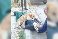 Conoce a Tony, el perro que no abandonó a su dueño tras un accidente