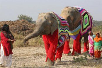 En este pueblo de India han tejido jerséis para proteger a los elefantes del frío
