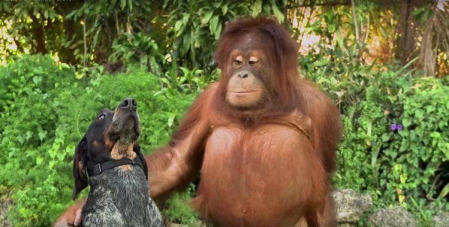 Aunque no se parezcan entre sí, los animales pueden adorarse demasiado y este video lo comprueba